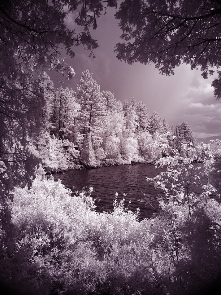 infrared : a view through the trees