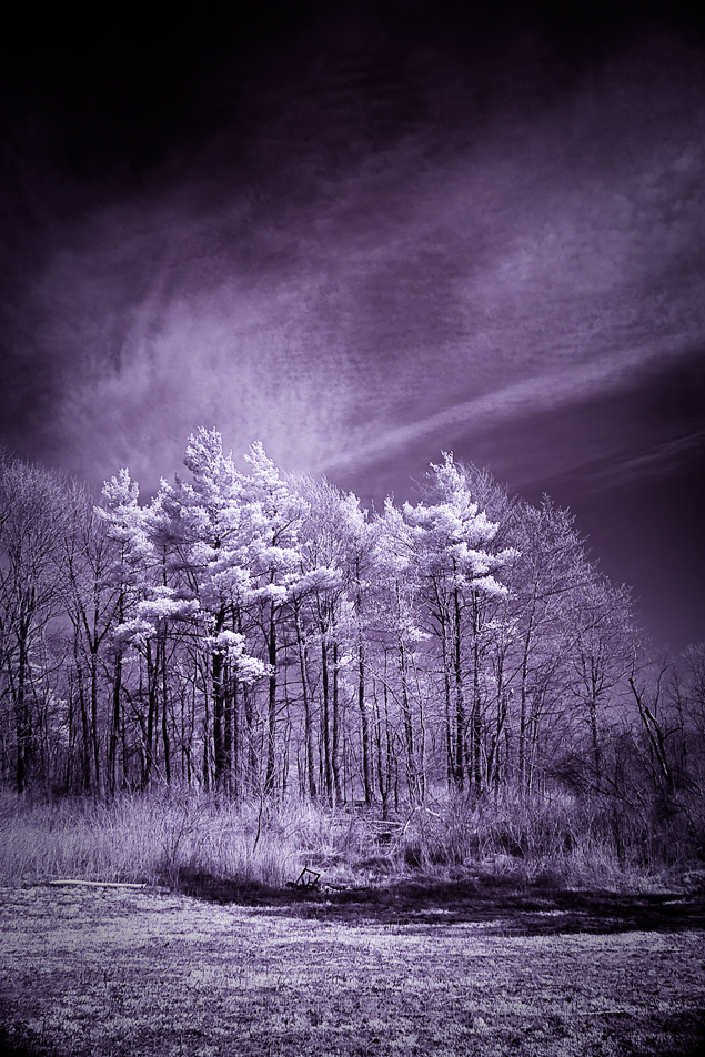 infrared: trees and all that